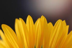 Optimism – something beyond just positivity!