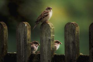 Wisdom from a bird!